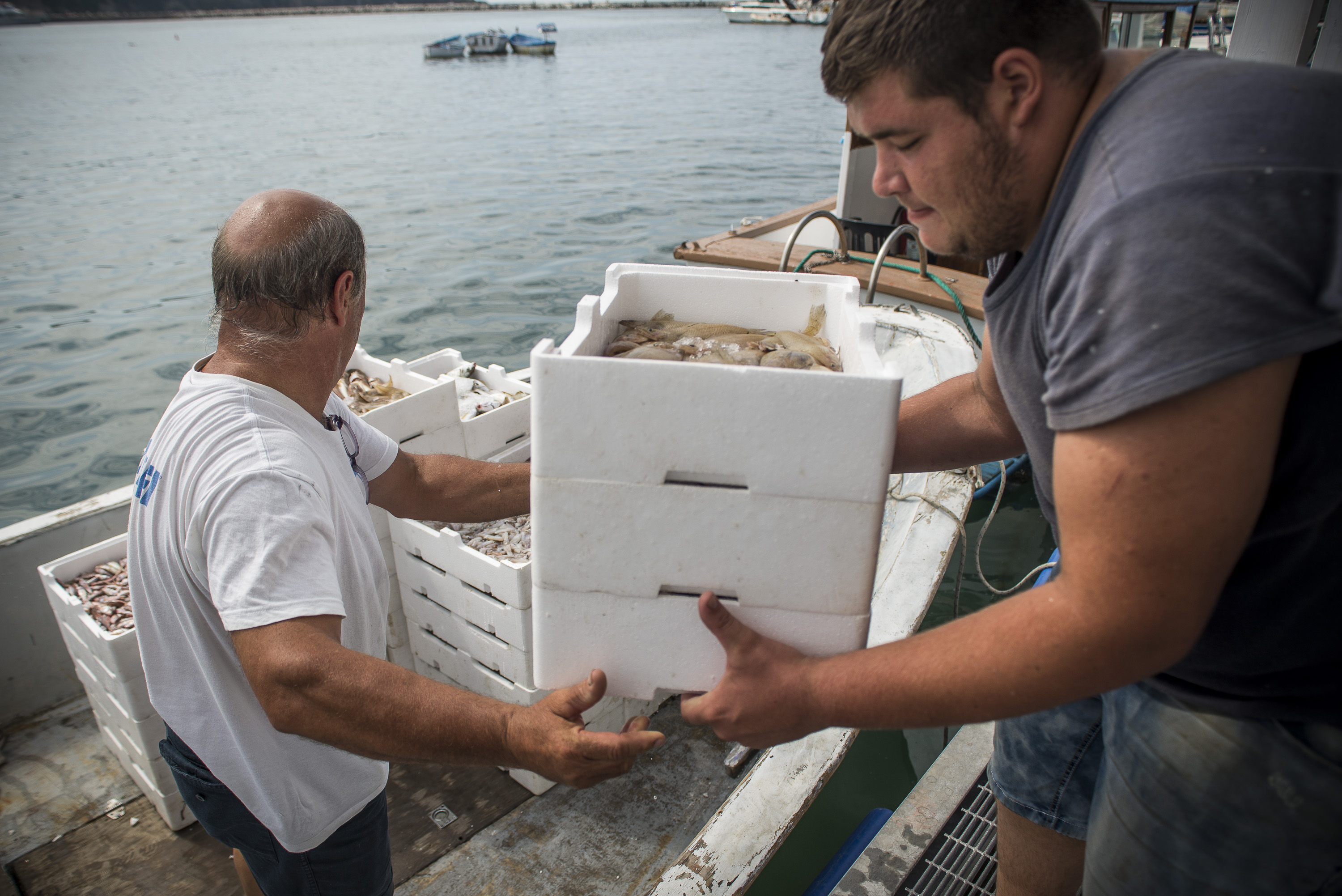 Local fishermen unload the fish in the area to the unloading in Procida, Italy